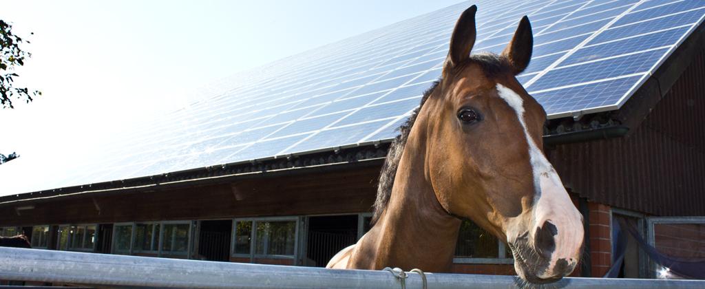 Photovoltaikanlage Stalldach mit Pferdekopf